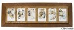 Postcards ; Reinthal & Newman; [?]; CT84.1686b