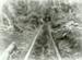 Photograph [Tramway, Pounawea]; [?]; 1909; CT89.1888.26