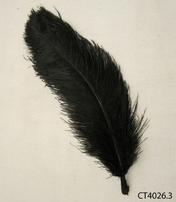 Feather, ostrich; [?]; [?]; CT01.4026.3