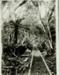 Photograph [Tramway]; [?]; [?]; CT78.1008a1