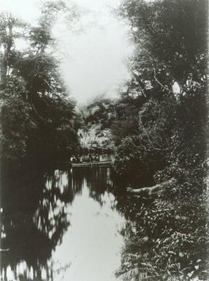 Photograph [Catlins River, 1908]; [?]; 1908; CT89.1889.8