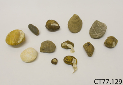 Fossils; CT77.129
