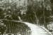 Photograph [tramway bridge]; McTainsh, A Ernest; c1930s; CT86.1832a1