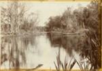 Photograph [Maclennan River]; [?]; [?]; CT79.1013c
