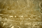 Photograph [Latta Bros, Katea]; [?]; 1899-1910; CT84.1659b
