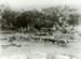 Photograph [Bullock team, Catlins River]; [?]; 1909; CT89.1888.15