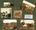 Photograph [Langmuir Farm, Purakauiti]; [?]; c1930s; CT85.1696b