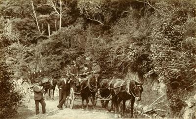 Photograph [Mr Callahan driving his coach]; [?]; [?]; CT79.1259b