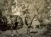 Photograph [Frank Slater]; [?]; 1914-1918; CT08.4839c