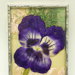 Postcard [Pansy]; [?]; 1914-1918; CT95.2061.5