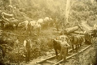 Photograph [Latta Bros mill, Katea]; [?]; 1899-1910; CT84.1659a