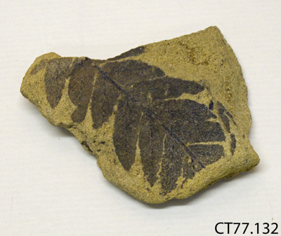 Fossil; CT77.132