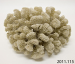 Coral; 2011.115