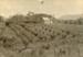 Photograph [Orchard, Taukupu]; [?]; [?]; CT79.1253a3