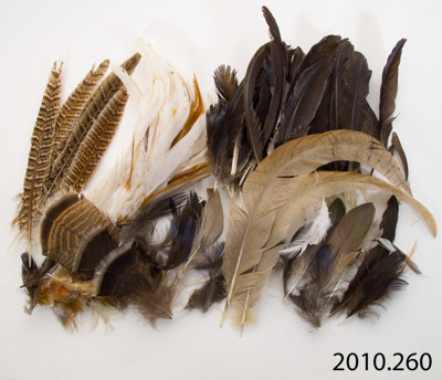 Feathers; [?]; 2010.260