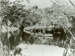 Photograph [Upper Catlins River, 1901]; [?]; 1901; CT89.1888.10