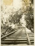 Photograph [Latta's bush tramway]; [?]; c1900; CT78.1008c