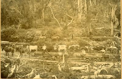 Photograph [Latta Bros mill, Katea]; [?]; 1899-1910; CT78.1002a3