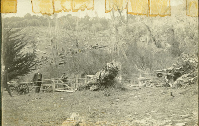 Photograph [Pulling out stump from bush]; [?]; [?]; CT83.1114e2