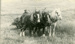 Photograph [John Ford and draught horses at work]; [?]; Early 20th century; 2010.525