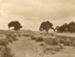 Photograph [False Island from Surat Beach]; Williams, W (Mr); Early 20th century; CT79.1076c