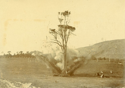Photograph [Blowing up a rimu tree]; [?]; [?]; CT79.1063b