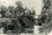 Photograph [Lees' Bridge, Owaka Valley]; [?]; c1900; CT85.1734b.2