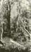 Photograph [Tramline to Stuart's siding]; [?]; [?]; CT85.1724g