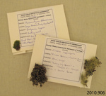 Collection of Catlins' Specimens; Catlins District; 2010.906