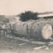 Bullock Team hauling logs; 19-142