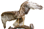 Bird - Hawk; 666