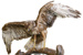 Bird - Australasian Harrier; 666