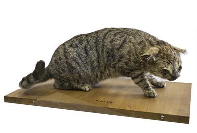 Cat; 17-93