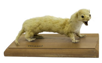 Weasel; 17-96
