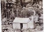 Bush Camp; 16-24