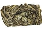17-8 Eggs & Nest