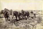 Horses plowing.; 16-110