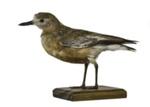 Bird - New Zealand Dotterel; 830