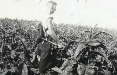 Spraying at Tobacco Lands; 19-160