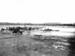 First Telegraph poles in Mangawai; 17-33