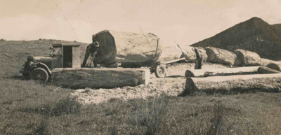 Logs from Cullens Bush; 19-146