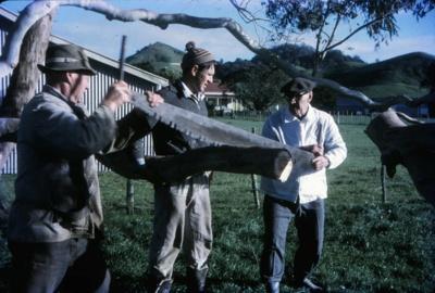 Cross Cut Saw Demonstration; 18-101
