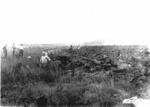 Gumfields at Mangawai Flats.; 16-73