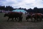 Bullock Team; 18-107