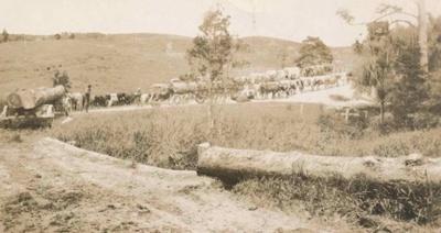 Browne and Morgan Bullock Teams; 19-140