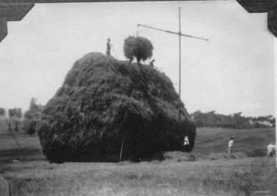 Haymaking at Dowson's Farm, Kaiwaka; 18-260
