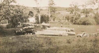 Hauling Logs; 19-153
