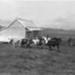 Yates Farm; 19-44