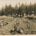 Tung Oil Plantation; 17-16E