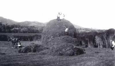 Haystacking, Browns Farm; 20-165
